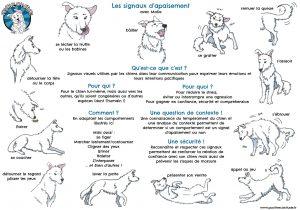 Fiche de signaux d'apaisement des chiens créée pour le club canin Positive Canitude par Mahault et Sarah