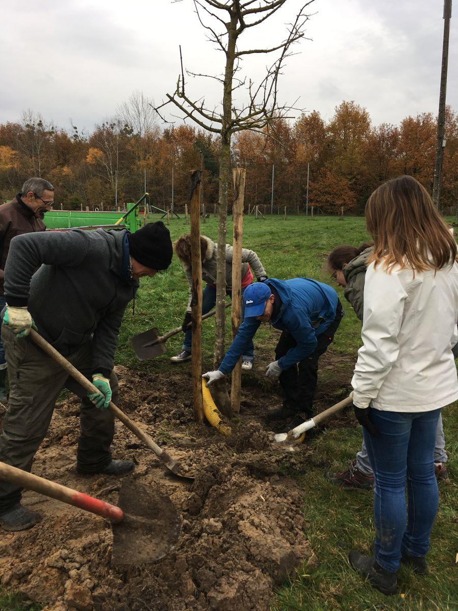 Des pelles pour planter un arbre